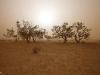 l047_cooper_creek_sandstorm
