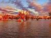 p186_cooper_creek_sunset_f1b7420_5