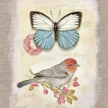 BIRDS & BUTTERFLIES